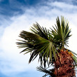 Palm tree against sky — Stock Photo #31309707