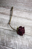 Dried rose on old vintage wood plates — 图库照片