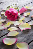 Rose and Rose petals lying down on a wooden table — Stock Photo