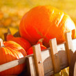 Wooden wheelbarrow with pumpkins — Stock Photo