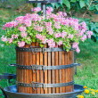 Old barrel with flowers — Stock Photo
