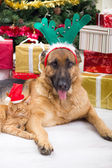 Dog and cat in Christmas night — Stock Photo