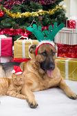 Две лучшие друзья собаки и кошки в рождественскую ночь — Стоковое фото