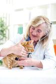 Inspección veterinaria senior un gato pequeño — Foto de Stock