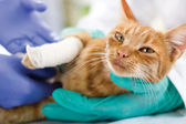Cat with broken leg — Stock Photo