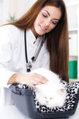 Veterinarian with stethoscope calms Persian cat — 图库照片
