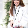 Vet with stethoscope examines Persicat — Foto Stock #36832761
