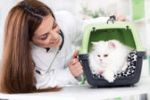 Veterinarian with stethoscope calms Persian cat — Photo