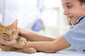 Boy with a cat at home — Stock Photo