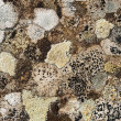 Stock Photo: Lichens on rock