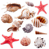 Shell collection, isolated — Stock Photo