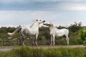 Pferde — Stockfoto