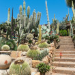 Garden of exotic plants Pallanca - Stock Photo
