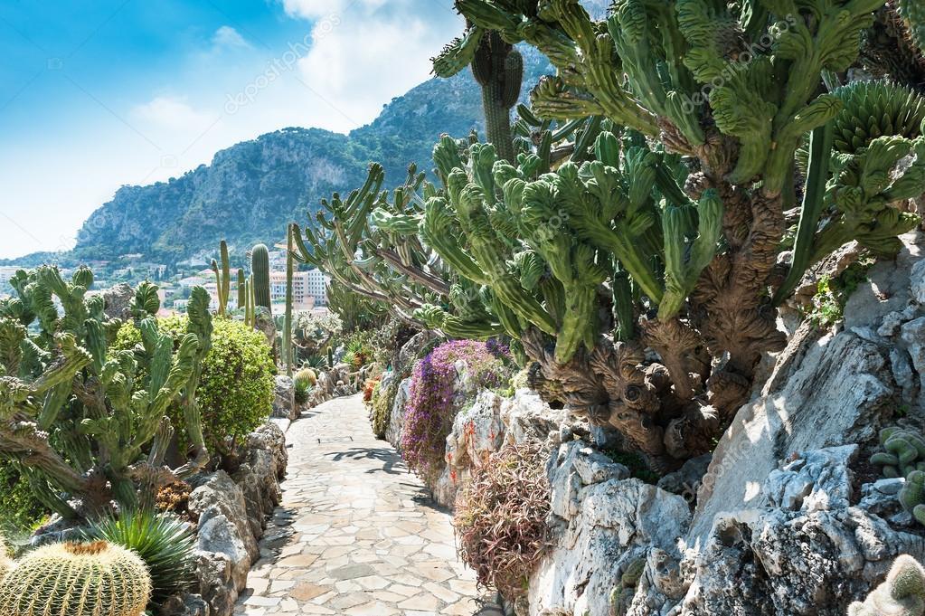 Jardins cactées et plantes succulentes à monaco — Photographie ...