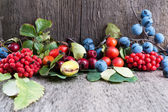 Autumn berries — Stock Photo
