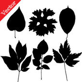Set of silhouettes of leaves of trees and flowers isolated on white — Stock Vector