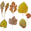 Leaves of various flowers  and trees — Stock Photo #43418305