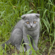 Small gray cat — Stock Photo