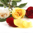 Three colorful roses — Stock Photo
