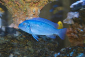 Tropical fish in coral — Stockfoto