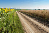 Sunflowers and wheat on the road side — Stock Photo