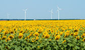 Windmills behind sunflower field — Stock Photo