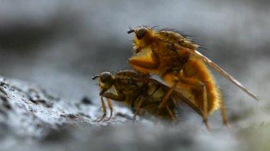 Mating flies — Stock Video #12587622