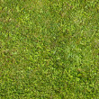 Seamless green grass texture — Stock Photo #30697907