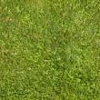 Seamless green grass texture — Stock Photo