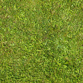 Seamless green grass texture — Stock Photo