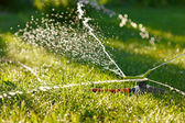 Irrigation of green grass — Stock Photo