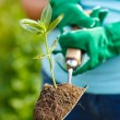 Plant in earth on a small spade — Stock Photo #30903331