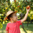 Little happy boy touching apple — Stock Photo #30903485