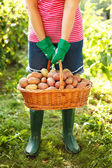 Woman carrying potatoes in garden — Stok fotoğraf