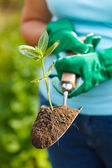 Plant in earth on a small spade — Stock Photo