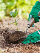 Plant being planted in garden — Stock Photo