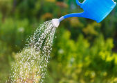 Irrigating with sprinkling can — Stock Photo
