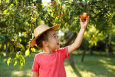 Little happy boy touching apple — Stock Photo