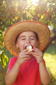 Boy eating apple in orchard — Stock Photo