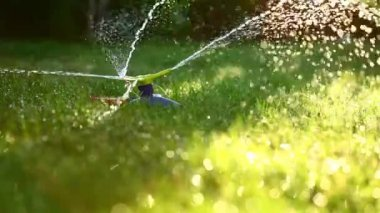 Three-way sprinkler in garden — Stock Video