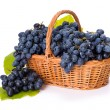 Stock Photo: Blue grape clusters in basket