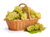 White grape clusters in basket — Stock Photo