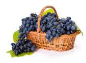 Blue grape clusters in basket — Stock Photo