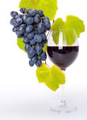 Glass of red wine with blue grape cluster — Stock Photo