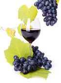 Glass of red wine with blue grape clusters — Stock Photo