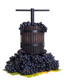 Traditional manual grape pressing utensil with blue grapes — Stock Photo