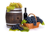 White and blue grape in basket with barrel — Stock Photo
