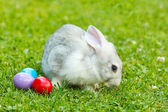 White easter rabbit in green grass — Stock Photo