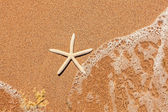 White starfish on sand — Stock Photo