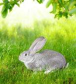 Gray rabbit in green grass — Stock Photo